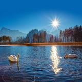 Swans alpine lake at sunrise