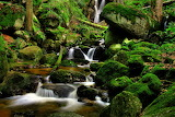 24426-nature-landscapes-waterfalls-trees-forest-moss-rocks-strea