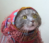 Babushka Kitty Cat - Poor cat...lol