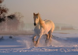 White horse - Photo from Piqsels id-frtfi