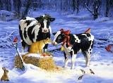 Christmas Calf
