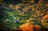 Morning sun farms in valley of Carpathian mountains
