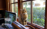 Mac-desk-window-cat-look