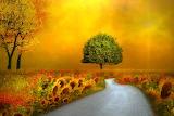 Fantasy-art-sunflower-fields
