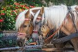 montura horse