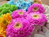 Flowers @ wallpapercave.com...