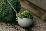 healthy food-broccoli