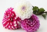 Kvetiny-na-plochu