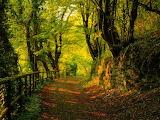 Por un camino