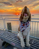 Big yawn on pier at sunset