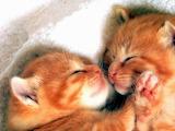 CuteCats