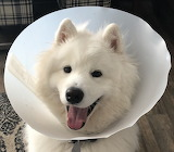 Cone of Not Ashamed