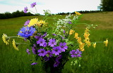 ^ Flowers from the meadow