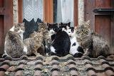 9 Cats 1