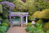 Flowers - Ascott House - Wisteria