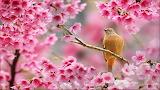 Pajarito entre flores