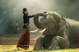 Elephant Love @ Pixabay...