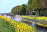 Canal, bridge, trees, yellow flowers, spring, landscape