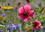 Wildflower Petals