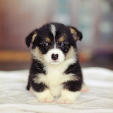 ☺Adorable Puppy...