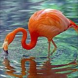 ~Flamingo~