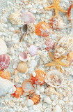 Pale shells