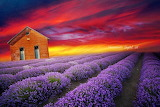 Colours-colorful-cottage-lavender-field-red-sunset-digital-art