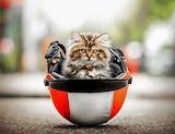 Kitten in a helmet