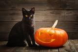 1halloween cat