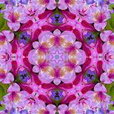 #Flower Kaleidoscope