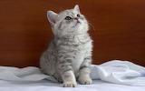 Kitten-look