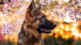 German-shepherd-flower