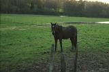 cheval dans son pré /horse in a field