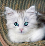 Adorable Kitty...