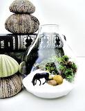 Wild horse terrarium