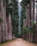 Botanical Park of Rio de Janiero, Brazil