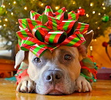 12.25.14-Dogs-Who-Are-SO-Over-Christmas4