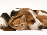 Dog and cat10