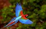Beautiful-bird-wallpaper-for-desktop