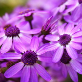 * Lovely Blossom...