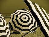 Zebra Umbrellas
