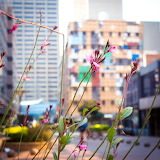 Cityscape with Flowers