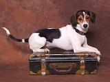 Dog ready to travel
