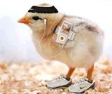 #Marathon Chick