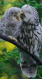 owl+baby