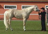 Texas Quarter Horse
