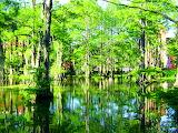Swamp, Louisiana