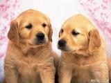Two cute dog