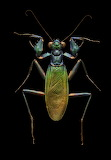 "Science Colossal ""Levon Biss"" ""Iridescent-Bark-Mantis"""