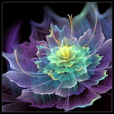X-Ray colorful transparent flower